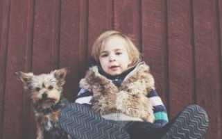 Как научить ребёнка не бояться кошек, собак и других животных, советы психолога