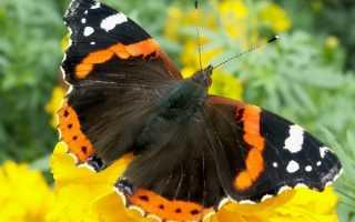 Пересказ рассказа 'Бабочка- красавица' – конспект