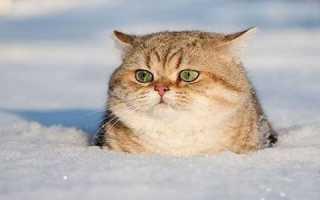 Информация для родителей по лексической теме: Поздняя осень, Дикие животные готовятся к зиме