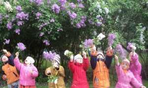 Использование основ экологической культуры в коррекционной непосредственно-образовательной деятельности с детьми с ОВЗ