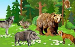 Дикие животные наших лесов – конспект НОД для старшей группы