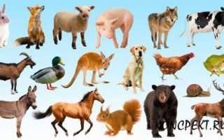 Презентация: Домашние животные